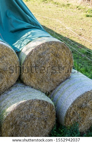 Straw bales and silage bales on the field #1552942037