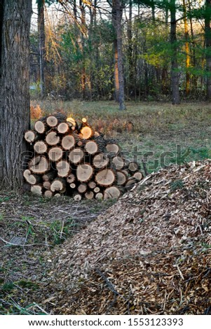 Tree utilization firewood & wood chip piles #1553123393