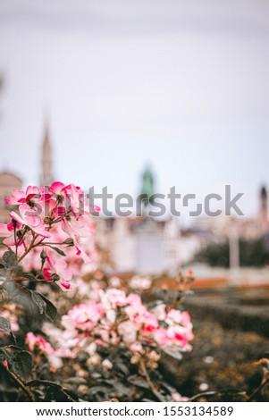 Mont des Art Flowers Bokeh