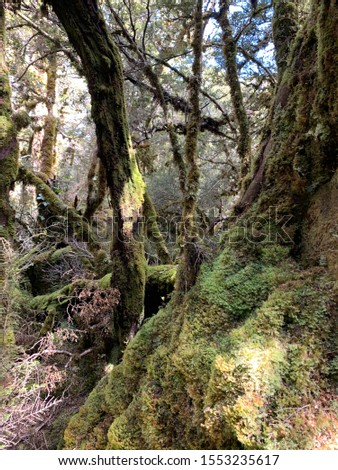 beautiful lush green forest landscape on Routeburn track #1553235617