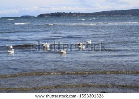 birds on the ocean shore #1553301326
