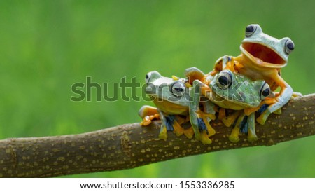 Funny forest three green frog in one family survive in the forest on the branch #1553336285
