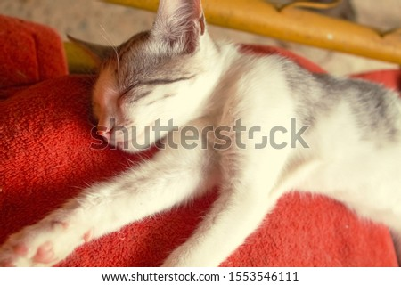 sleeping and smiling kitty close up, pets and animals, sleeping animals, cute and beautiful pets, colorful and bright photos of kittys, blurred. #1553546111