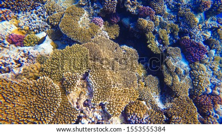 Coral Reef and Tropical Fish in Sunlight. Singapore aquarium. Feeding fish. Beautiful Red Sea Egypt. Undersea world. Beautiful corals. A lot of fish. Blue water.  #1553555384