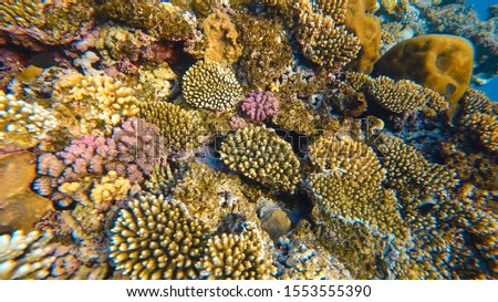 Coral Reef and Tropical Fish in Sunlight. Singapore aquarium. Feeding fish. Beautiful Red Sea Egypt. Undersea world. Beautiful corals. A lot of fish. Blue water.  #1553555390