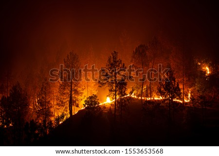 Bush forest wild fire at night in Barechhina, Almora, Uttarakhand, India #1553653568