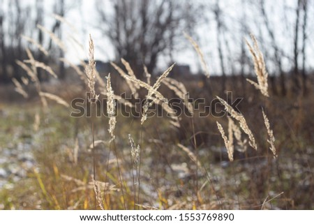 Dry grass warm autumn in October #1553769890