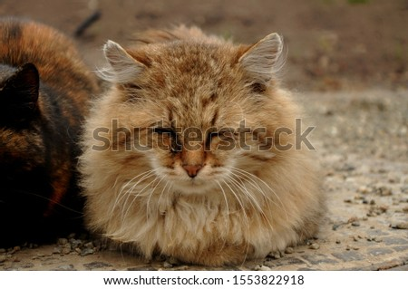 "Cat, or domestic cat - domestic pet, one of the most popular (along with dog) ""animals-companions."" #1553822918"
