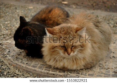 "Cat, or domestic cat - domestic pet, one of the most popular (along with dog) ""animals-companions."" #1553822921"