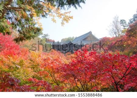 Kyoto/ Japan - 28 November 2018: The colorful autumn leaves at Tofuku-ji (Tofukuji temple). #1553888486