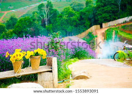 Flowers in the morning at Moncham Viewpoint, Chiang Mai Province Is a popular tourist destination #1553893091