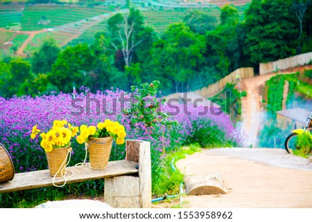 Flowers in the morning at Moncham Viewpoint, Chiang Mai Province Is a popular tourist destination #1553958962