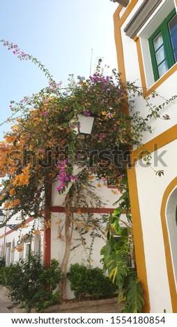 Pretty flowers in a pretty town #1554180854