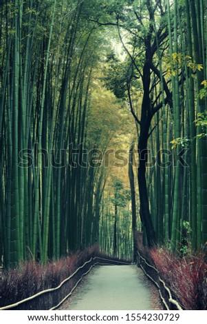 Bamboo Grove in Arashiyama, Kyoto, Japan. #1554230729