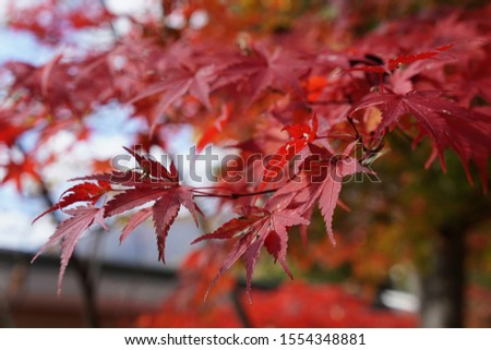 Autumn begin with red color. #1554348881