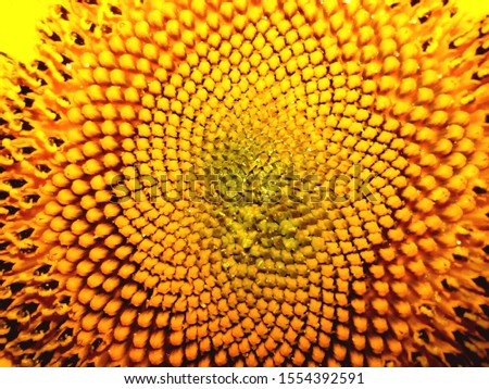 patterned heart of decorative yellow sunflower #1554392591