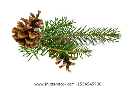 Brown pine cone  isolated on white background with clipping path with clipping pass #1554545900