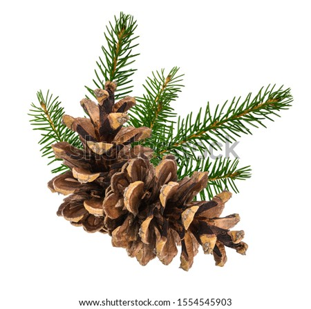 Brown pine cone  isolated on white background with clipping path with clipping pass #1554545903