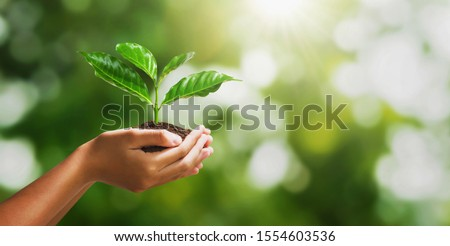 hand holding young plant on blur green nature background and sunslight. concept eco earth day #1554603536