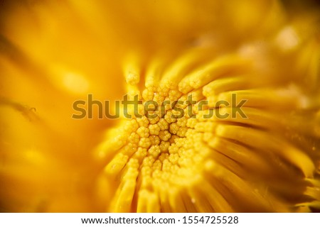 Macro photo of yellow flower Royalty-Free Stock Photo #1554725528