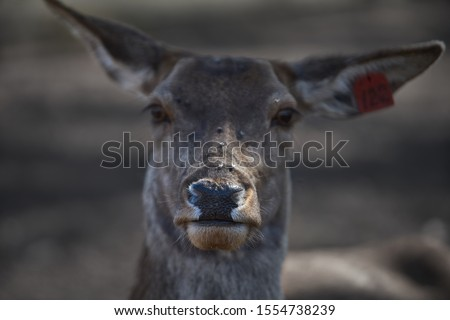 Young deer at one of the latvian zoo Royalty-Free Stock Photo #1554738239