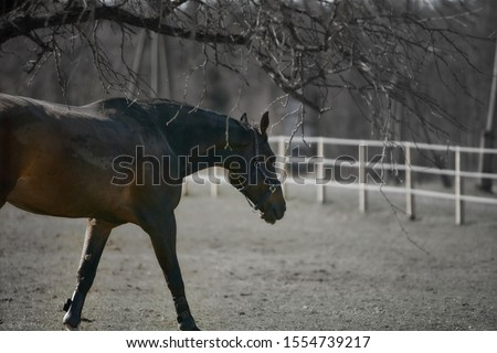 Horse at the wild life Royalty-Free Stock Photo #1554739217