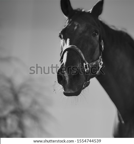 Wild horse at the nature          Royalty-Free Stock Photo #1554744539