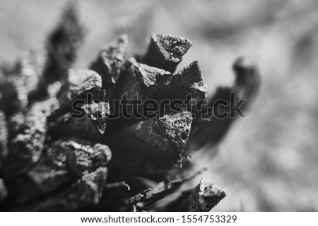 Closeup shoot of fallen pine Royalty-Free Stock Photo #1554753329