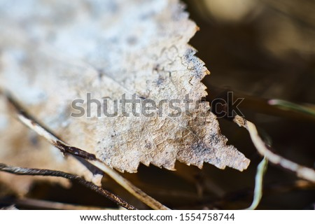 Macro shoot of dryed leaf Royalty-Free Stock Photo #1554758744