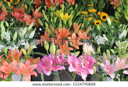 Colorful flowers with leaf beauty image #1554790868