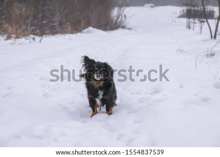 Small black dog running along the road in the village in winter day. #1554837539