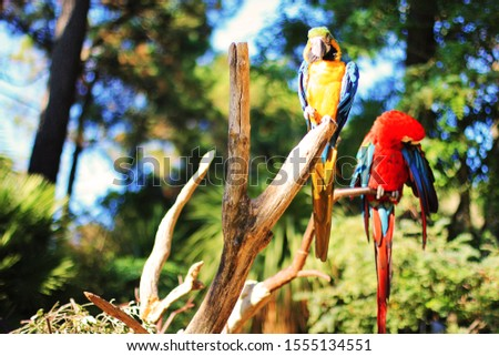 Colored parrots on the tree, in the branch #1555134551