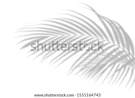 Abstract shadow black white palm leaf shadow on a white wall Background. Blank copy space. Royalty-Free Stock Photo #1555164743
