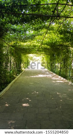 Green natural tunnel of plant branches with green leaves in the Park. Shadow on a hot Sunny day. tunnel plants. #1555204850