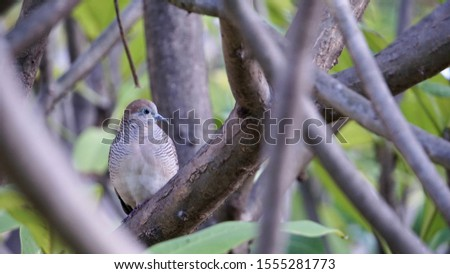 This little bird has a beautiful feather pattern. #1555281773