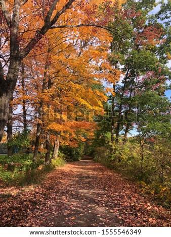 pretty fall pic taken on a walk