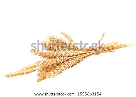 Sheaf of wheat ears isolated on a white background. Royalty-Free Stock Photo #1555663154