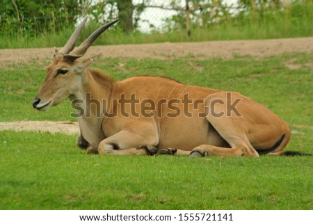 African Animals at the zoo #1555721141