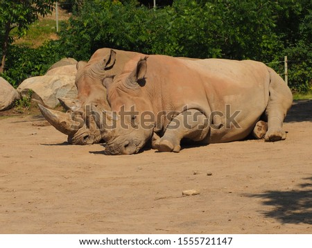 African Animals at the zoo #1555721147