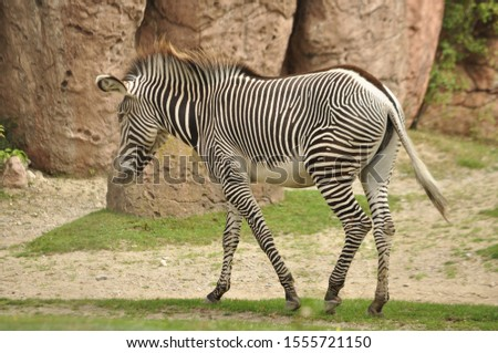 African Animals at the zoo #1555721150