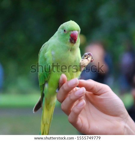 Beautiful parrot in the park. #1555749779