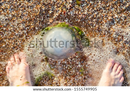Feet of a person looking at jellyfish at the beach. A Jellyfish on the beach and a man's foots. #1555749905