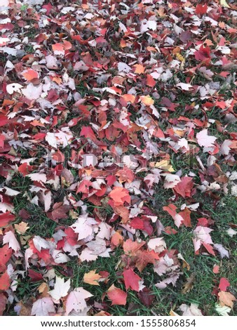 Fall leaves on the ground #1555806854