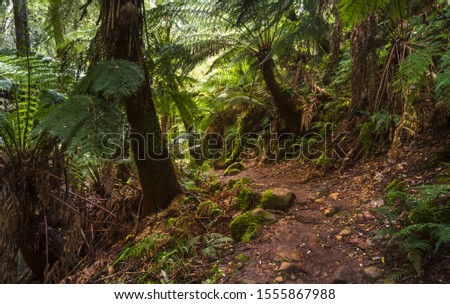 Erskine falls cool lush rainforest walking trail fern trees mossy rocky path dense forest sunny morning morning Lorne Victoria coastal  #1555867988