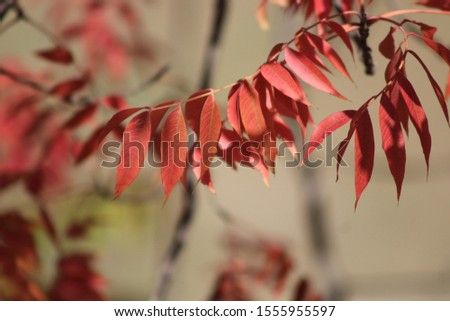 Autumn leaves in Texas 2019 #1555955597