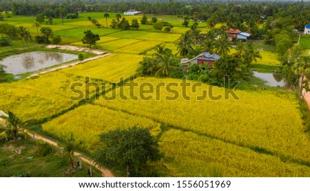 a ricefield and landscape near the city of Takeo in Cambodia #1556051969