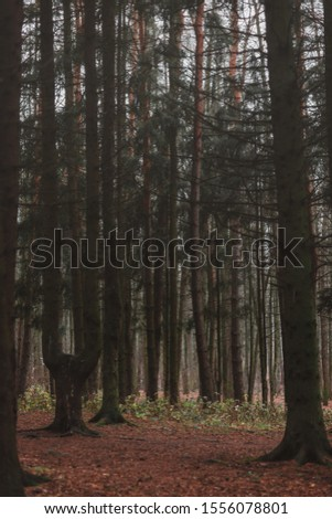 Mystical forest. Trees in the forest #1556078801