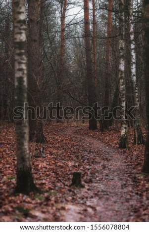 Mystical forest. Trees in the forest #1556078804
