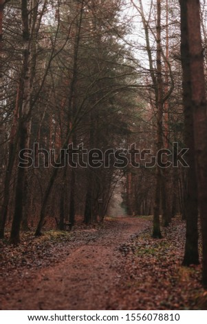 Mystical forest. Trees in the forest #1556078810