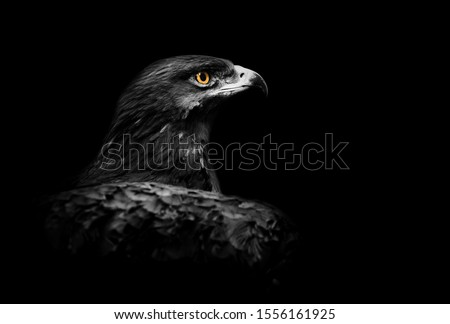 Concept: eagle over a black background with accent on his eye